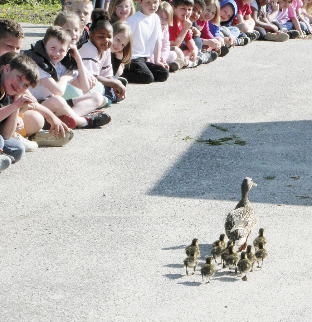 Washington Elementary holds fourth annual duck walk