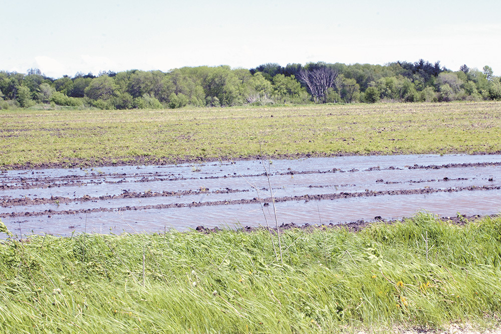 Farmers scramble to get corn planted, consider alternatives