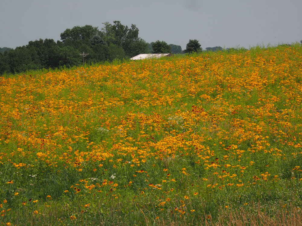 Colorful pollinator plot attracting attention