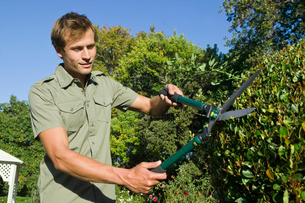 Fall Home & Car Care: It's time to winterize plants and gardens