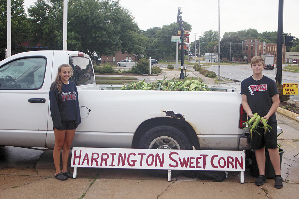 Sweet corn for sale, rain or shine